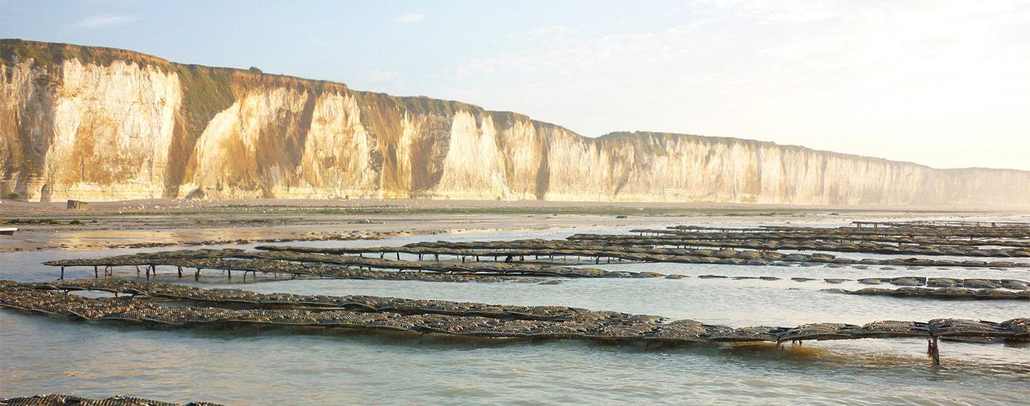 La Belle du Nordet, Vente Huîtres Normandes
